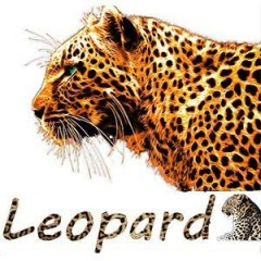 Leopard20