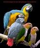 Parrotnut
