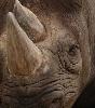 GrumpyRhino