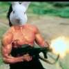 Rabbit35